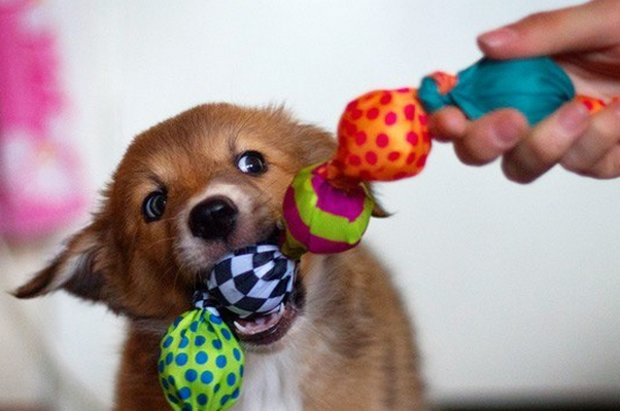 why do dogs like squeaky toys
