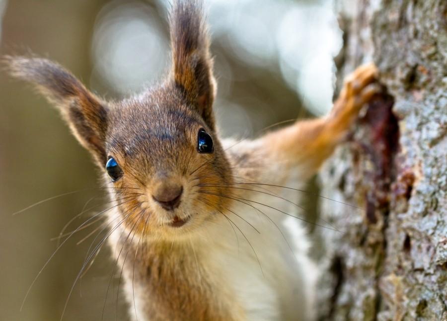 diy squirrel proof bird feeder slinky