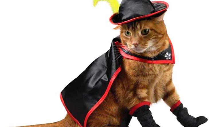 Best Cat Toys 2020.Cat Toys Best Goods