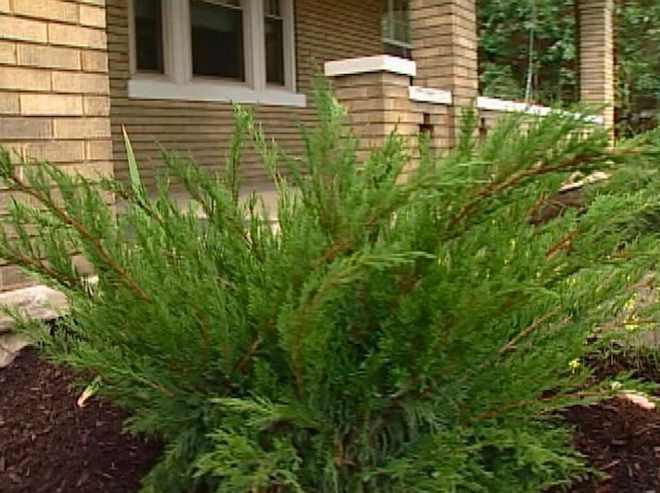 Green bush near house